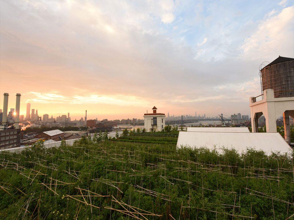 Brooklyn-Grange-(New-York)2-1آراد-چوب-ایرانیان3